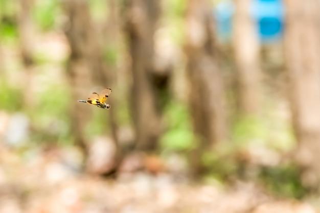 Летающая стрекоза