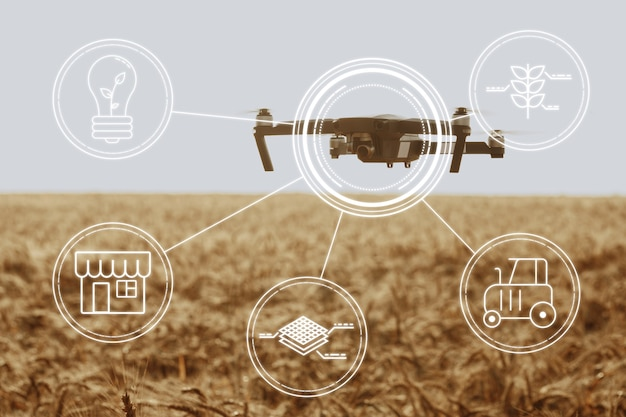 Flying drone above wheat field close up. agricultural and technology innovations concept