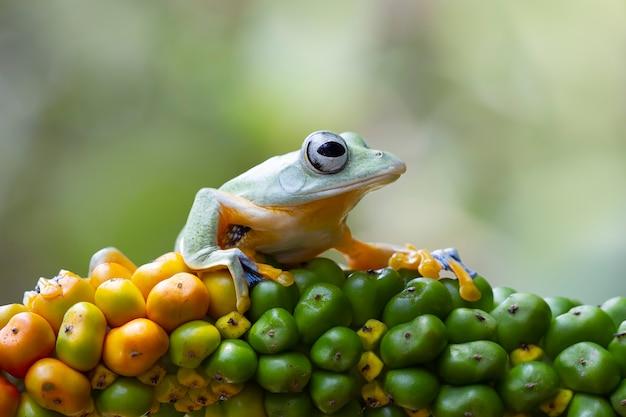 비행 개구리 근접 촬영 붉은 꽃 동물 근접 촬영 rhacophorus reinwardtii에 아름 다운 나무 개구리