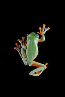 枝に飛んでいるカエルのクローズアップの顔