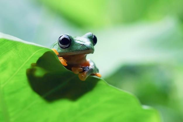 緑の葉に飛んでいるカエルのクローズアップの顔