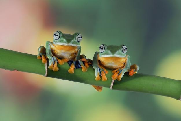 나뭇가지에 나는 개구리