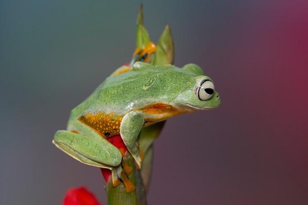 緑の葉の上に座って飛んでいるカエル