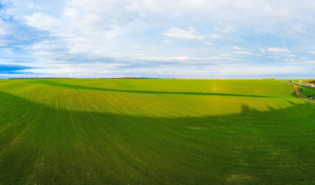 Полет над полем растущей пшеницы и панорамный снимок с дрона