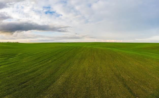 Полет над полем растущей пшеницы
