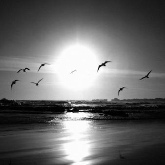 海の上を飛ん