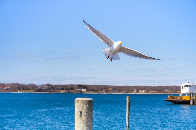 Flying seagull against blue sky over the lake.