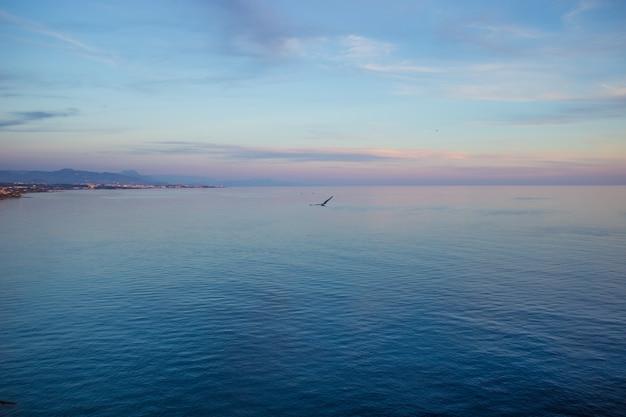 ビーチで飛んでいるカモメ