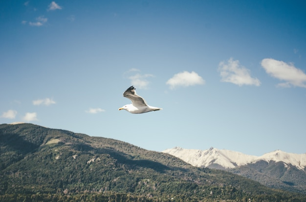 A flying seagull and the hills