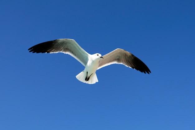 Летящая чайка в голубом небе летом