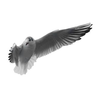 白い背景に分離された空飛ぶカモメ。