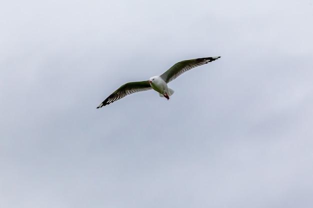 Летящая чайка на берегу тихого океана