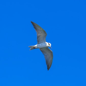 Flying seagulls in blue sky and tropical sea