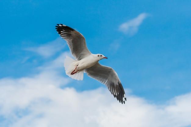 Flying seagulls on blue sky