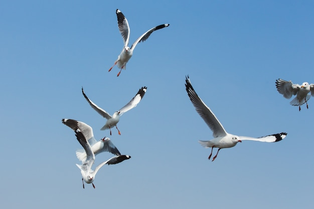 Летающие чайки в действии в bangpoo thailand