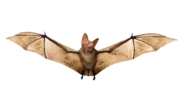 Flying vampire bat isolated for halloween decoration, 3d rendering