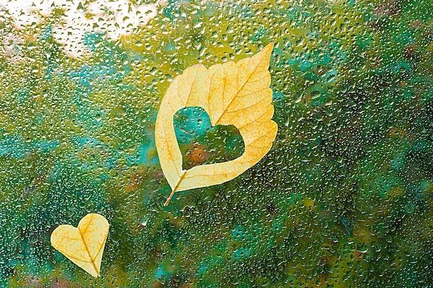 Падший лист застрял в окне, которое промокло от капель дождя. теплый взгляд в окно fo