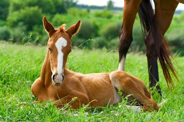 Foal on green grass