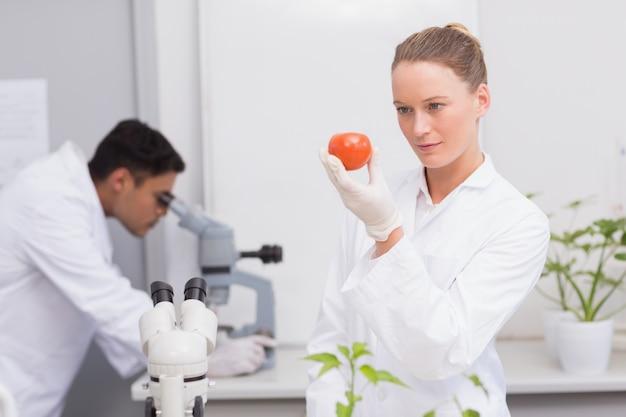 トマトを見てフォーカス科学者