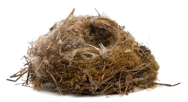 Focus stacking of a nest