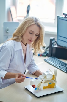 Focused calm experienced beautiful female otolaryngologist pointing with a ball-point pen at an artificial human ear on the desk