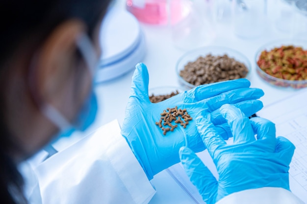 Focused dry pet food on hand. quality control personnel are inspecting the quality of dry pet food. quality control process of pet food industry.