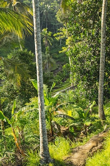 Focused photo on the palm trees that growing in the tropical forest, bright green colors