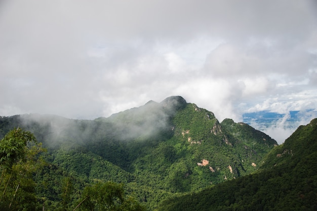 Fog covered the green mountains after the rain.
