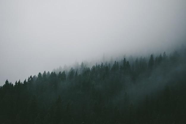 森の中の緑の松の木を覆う霧