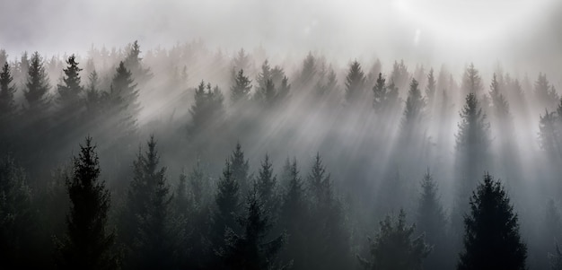 Fog divided by sun rays. misty morning view in wet mountain area.