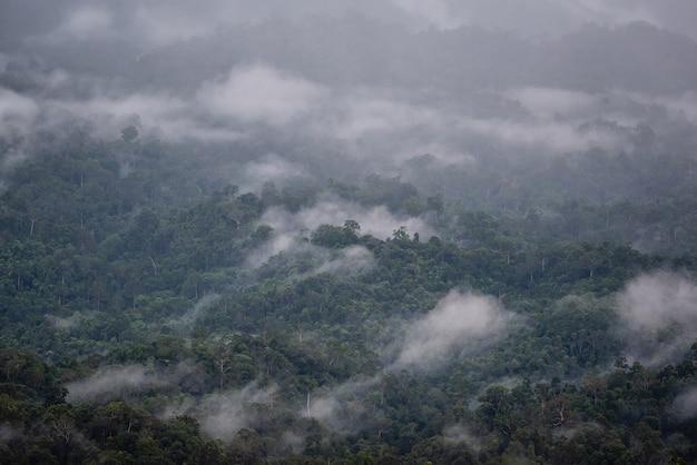 Fog down the hill