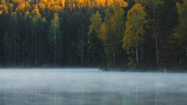 The fog floats over the lake in the autumn forest in the early morning at sunrise