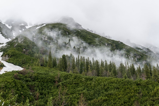 Fog at the foot of mountains with green forest