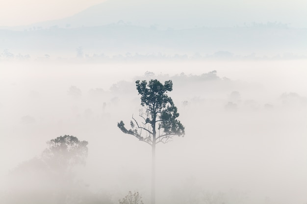 Fog in forest at thung salang luang national park phetchabun, thailand