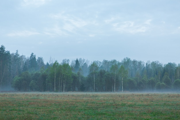 Fog in green forest on the valley. beautiful landscape with green forest at early morning