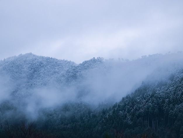 Туман в холмистых лесах