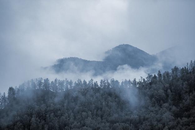山の霧。曇り。森林。