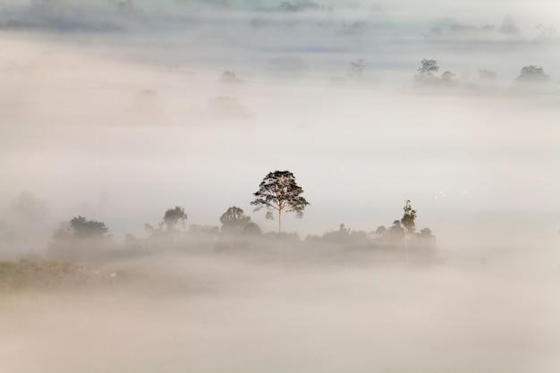 Fog in khao takhian ngo view point at khao-kho phetchabun, thailand