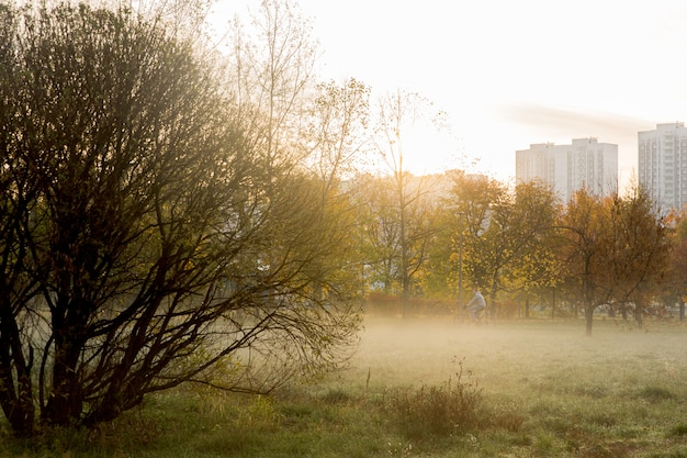 Fog in the morning park. sunrise with fog in the forest. beauty landscape