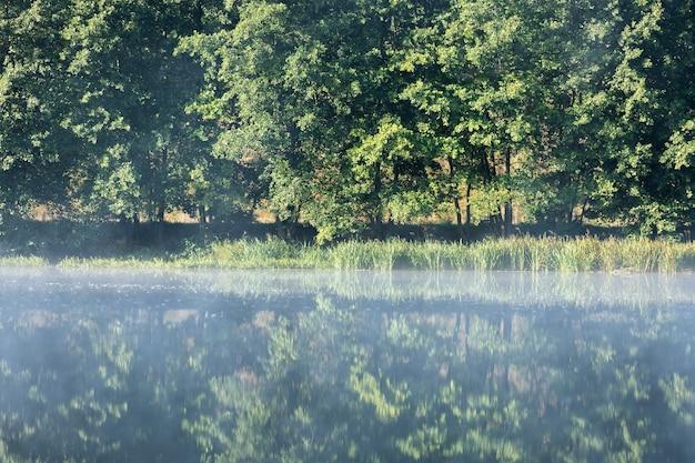 森の中の夜明けに川の上の霧。夜明けの川沿いの木々。霧の中の水の上の木の枝。