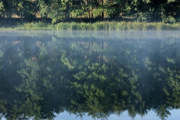 Nebbia sul fiume all'alba nella foresta alberi vicino al fiume all'alba