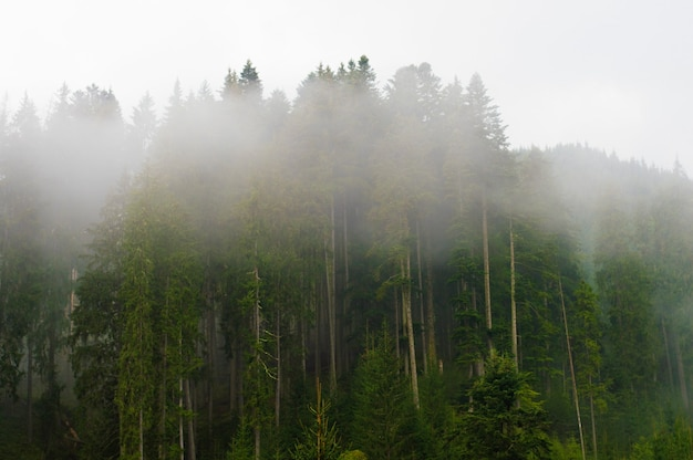 Fog in the trees, in the forest, sunset, dawn, overcast, nature, paddling