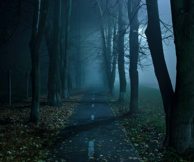 The foggy asphalt road between trees in the night