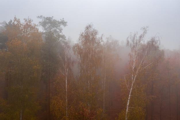 Туманный осенний лиственный лес. красивый красочный густой лес рано утром