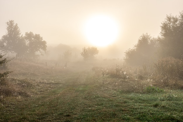 Foggy autumn landscape with silhouettes of trees and sun blurred in the sky.