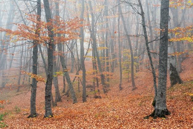 안개가 자욱한 가을 숲 풍경