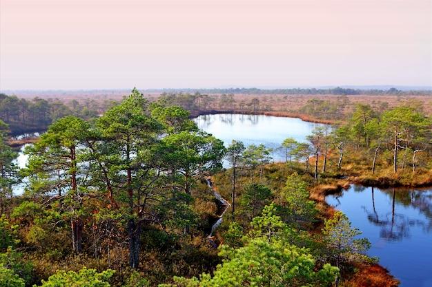 안개 낀 여름 아침에 marimetsa 지역 늪지 수영장에서 에스토니아의 분홍색 하늘이 있는 안개 낀 늪지 풍경