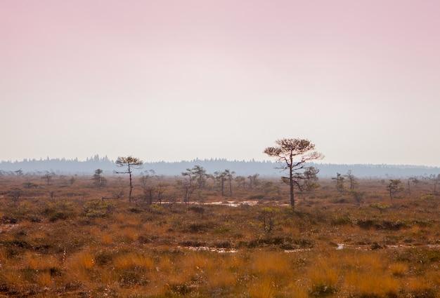 Marimetsa 지역의 marimetsa 늪지의 아름다운 풍경에서 에스토니아의 분홍색 하늘이 있는 안개 낀 늪지 풍경