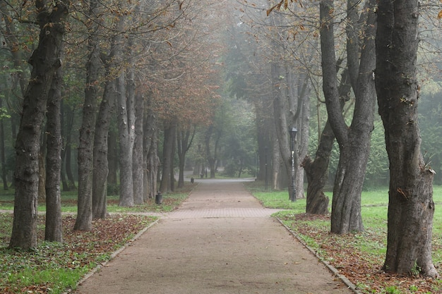 가을 안개 도시 공원