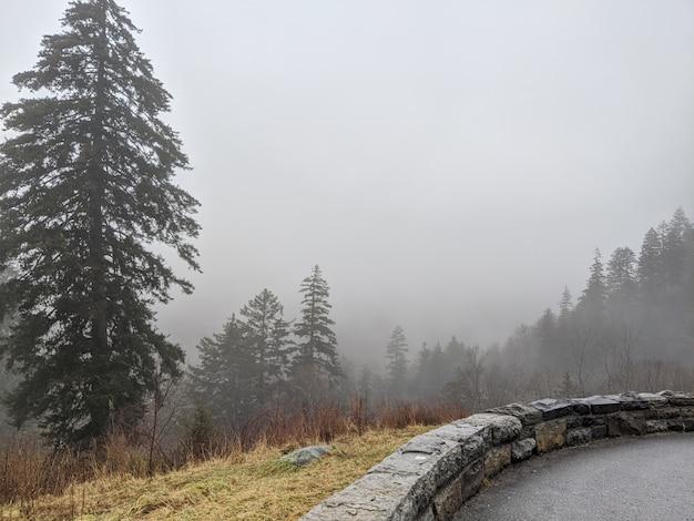 Scogliera nebbiosa con alberi di pino come visto dall'alto